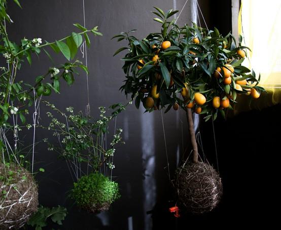 Name:  string garden 6.jpg Views: 25701 Size:  73.1 KB