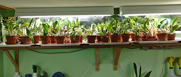 Name:  orchidroom4.jpg Views: 868 Size:  144.5 KB