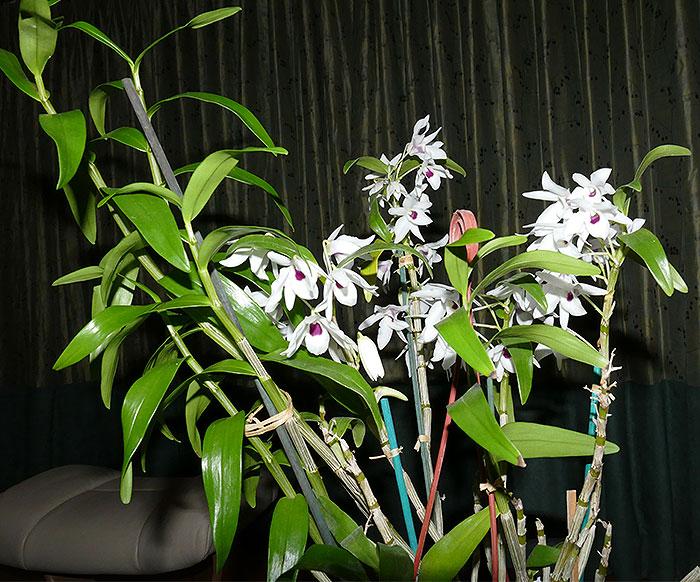 Name:  plant.jpg Views: 74 Size:  142.9 KB