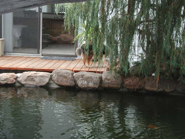 Name:  Fish Pond-3.jpg