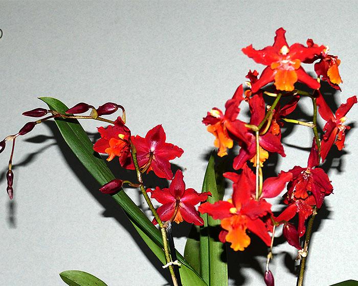 Name:  Flowers-14-Dec..jpg Views: 96 Size:  120.8 KB