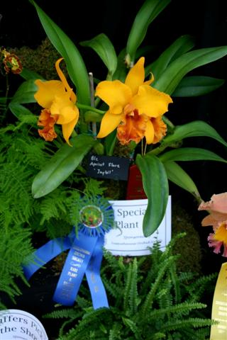 Name:  Blc at Lancaster show (Small).JPG