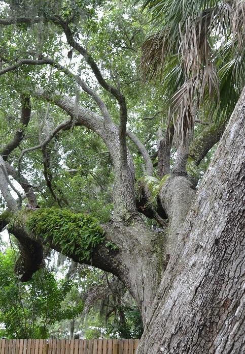 Name:  swamp02.jpg Views: 1358 Size:  304.4 KB