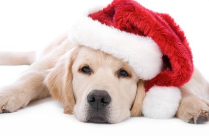 Name:  christmas-puppy.jpg Views: 214 Size:  133.6 KB