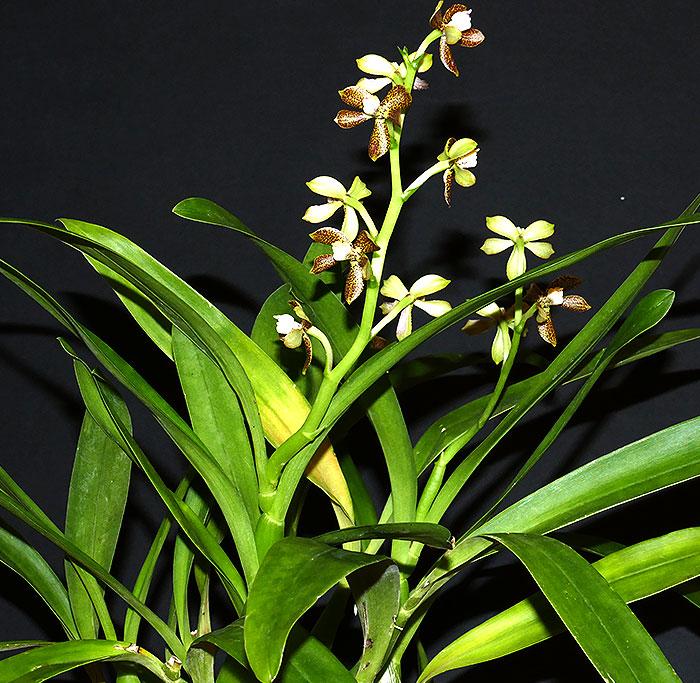 Name:  plant.jpg Views: 63 Size:  153.8 KB