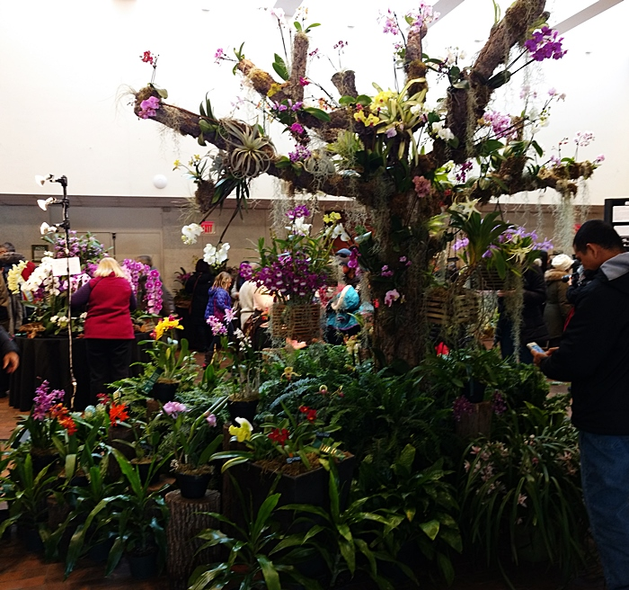 Name:  orchid tree.jpg Views: 134 Size:  314.8 KB