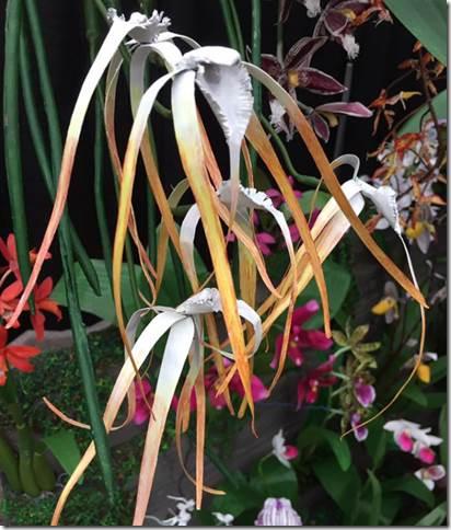 Name:  Cuculata.jpg Views: 51 Size:  39.9 KB