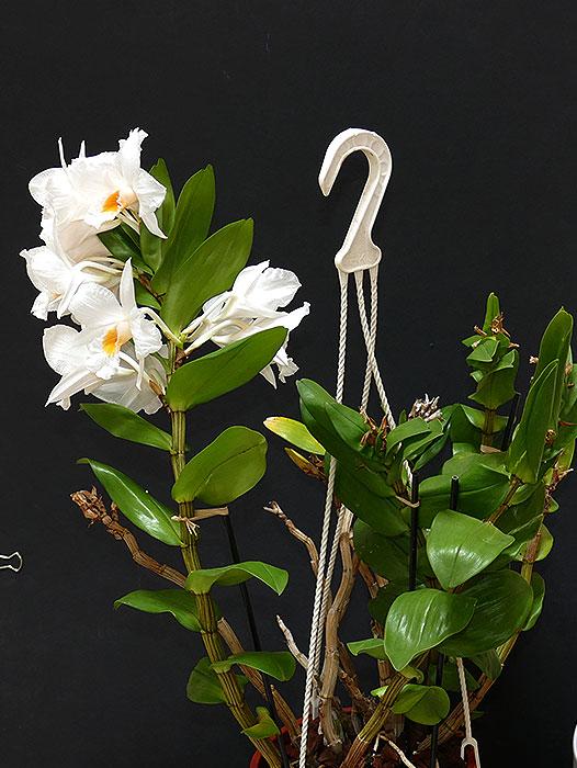 Name:  plant.jpg Views: 69 Size:  93.6 KB