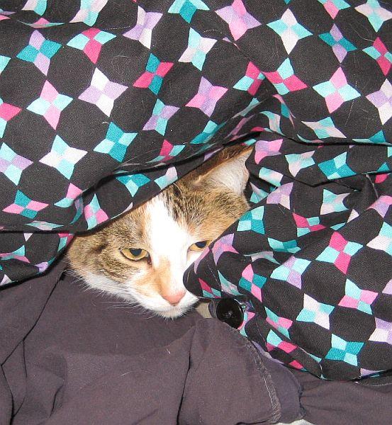 Name:  cold cat.JPG Views: 159 Size:  103.9 KB