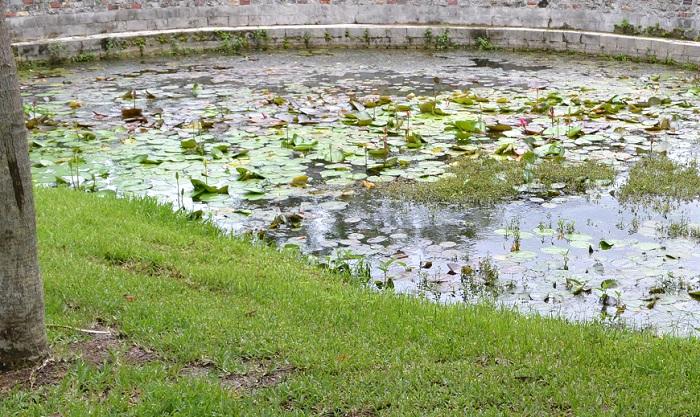 Name:  swamp08.jpg Views: 1223 Size:  250.9 KB