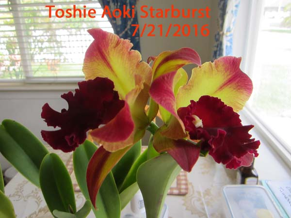 Name:  ToshieAokiStarburst.jpg Views: 721 Size:  64.8 KB