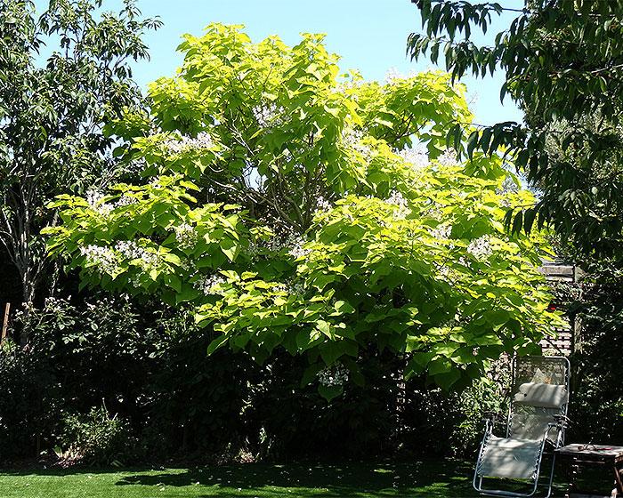 Name:  tree.jpg Views: 132 Size:  231.9 KB