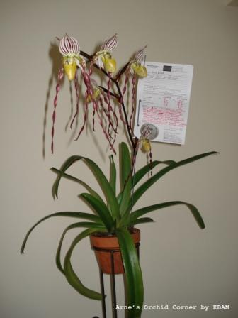 Name:  orchid forum 1.jpg Views: 1267 Size:  20.9 KB