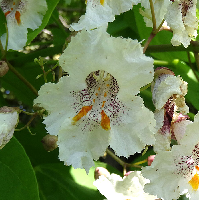 Name:  flower.jpg Views: 133 Size:  117.6 KB