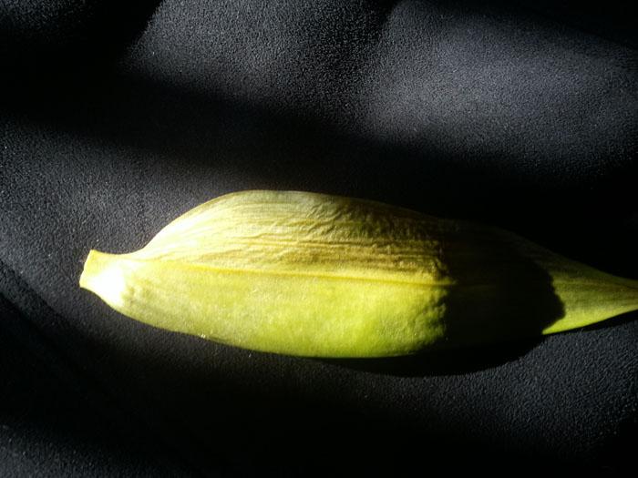 Name:  little plant 2.jpg Views: 383 Size:  96.1 KB