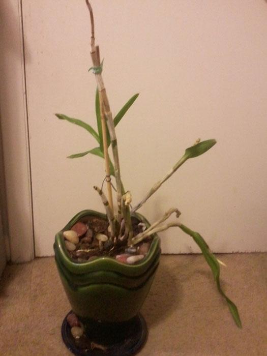 Name:  little plant 3.jpg Views: 309 Size:  75.6 KB
