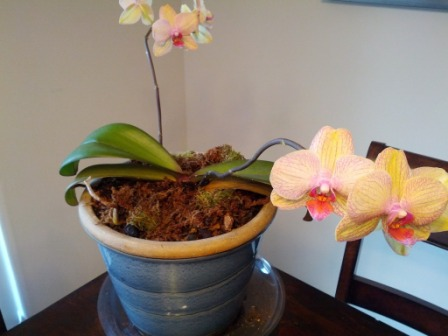 Name:  Orchid 2_2.jpg Views: 500 Size:  40.1 KB