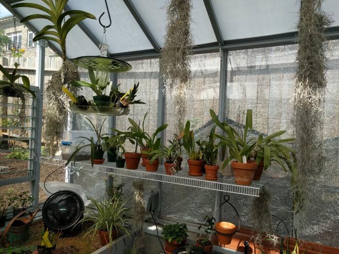 Name:  greenhouse072018bsized.jpg Views: 191 Size:  156.5 KB