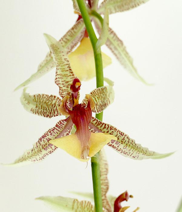 Name:  flower.jpg Views: 266 Size:  62.7 KB