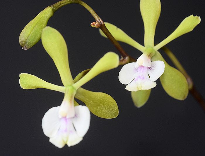 Name:  flowers-1.jpg Views: 49 Size:  50.7 KB