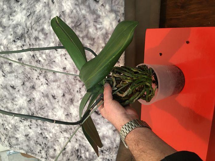 Name:  plant2.JPG Views: 91 Size:  63.9 KB