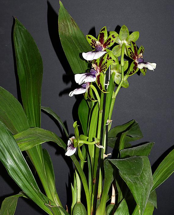 Name:  Plant.jpg Views: 68 Size:  117.7 KB