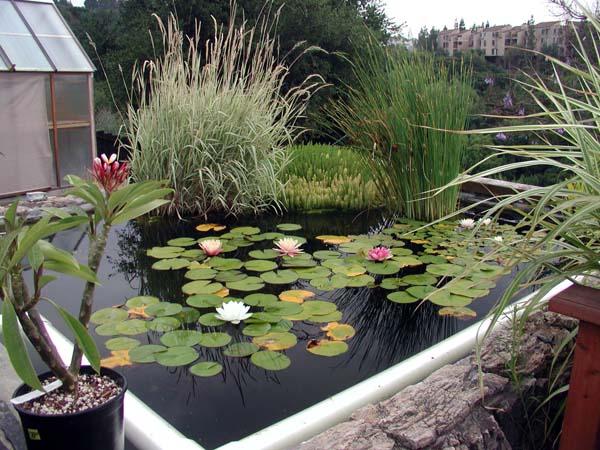 Name:  Water Plants-1.JPG Views: 155 Size:  104.6 KB