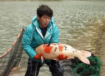 Name:  Hugefish.jpg Views: 107 Size:  18.0 KB