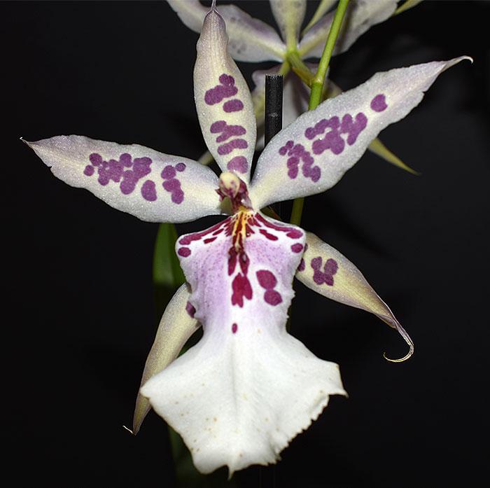 Name:  flower.jpg Views: 325 Size:  64.1 KB
