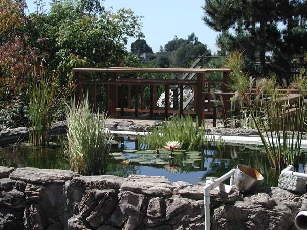 Name:  Waterplants.jpg Views: 148 Size:  116.0 KB