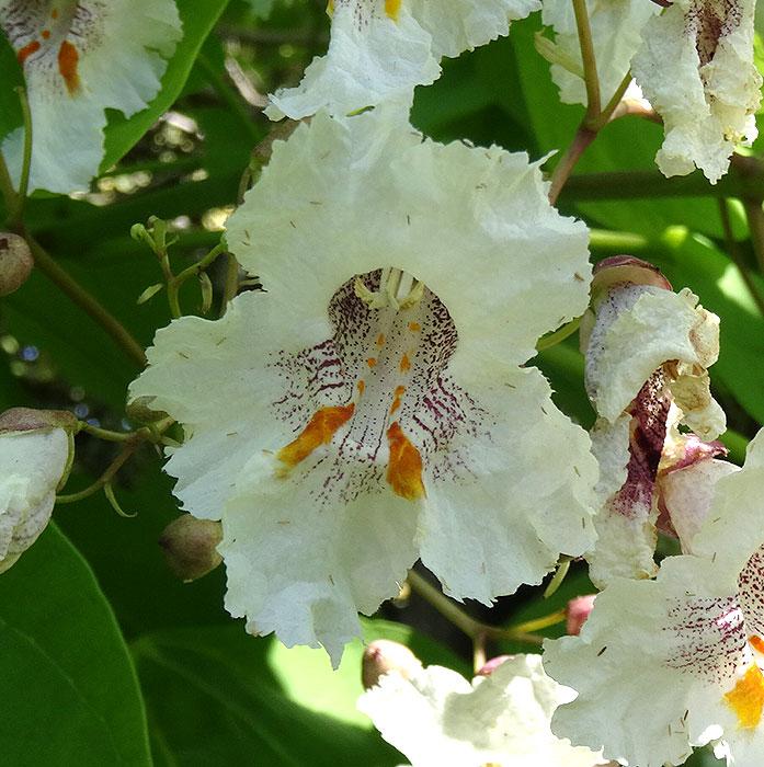 Name:  flower.jpg Views: 110 Size:  117.6 KB